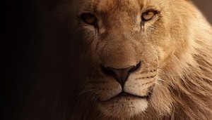 http://pixabay.com/en/lion-portrait-animal-portrait-face-617365/